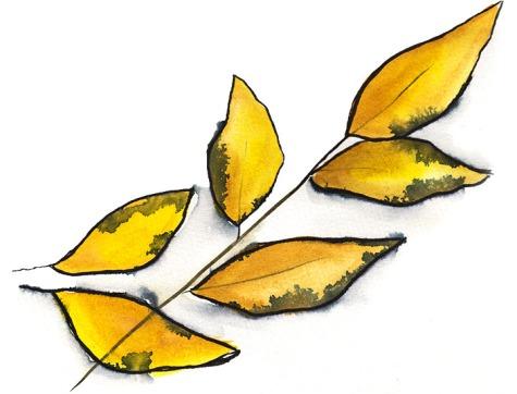 feuillejaune-gmorrisseau