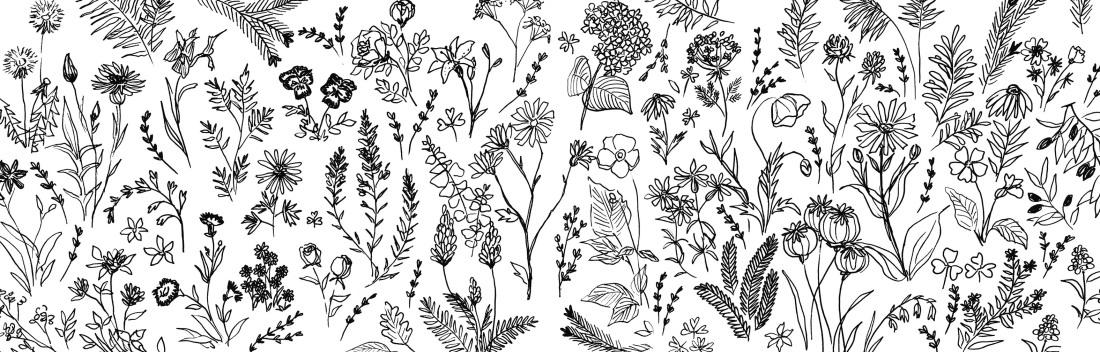 Floraison-gmorrisseau